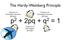 the hardy weinberg principle watch your ps and qs youtube