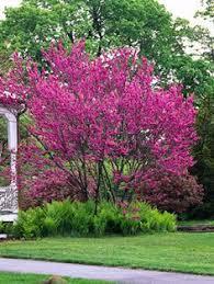 Small Backyard Trees by Small Yard U0026 Small Garden Landscaping Ideas Shrub Evergreen And