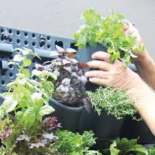 greenwall u2013 vertical gardening holman industries