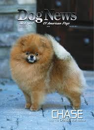 banana joe affenpinscher pedigree dog news april 20 2012 by dn dog news issuu