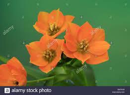 Flowers Plants by Bluete Bloom Flower Flowers Plant Plants