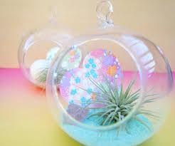 valentine u0027s day diy a pastel air plant terrarium