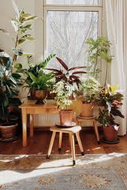 Indoor Gardening by 88 Best Houseplants Images On Pinterest Plants Gardening And