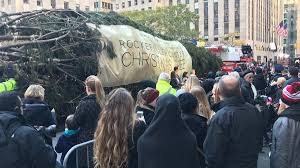 rockefeller center christmas tree arrives in new york city nbc