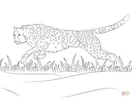 wonderful national geographic coloring pages with cheetah coloring