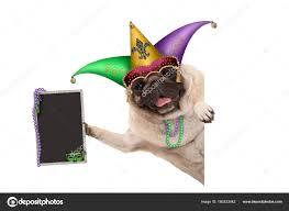 mardi gras dog mardi gras carnival pug dog harlequin jester hat venetian mask