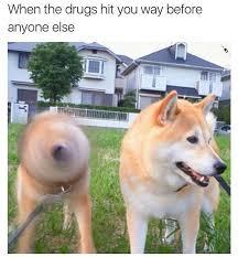 Hyper Dog Meme - the funniest pics you ll see all week gallery ebaum s world