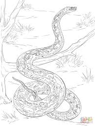 realistic boa constrictor download coloring pages animal