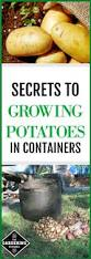 best 25 planting potatoes ideas on pinterest how to plant