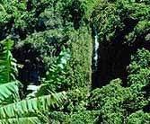 Adaptations Of Tropical Rainforest Plants - biology of plants plant adaptations