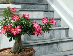 8 Houseplants That Can Survive by Top 8 Easy Care Flowering Houseplants