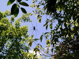 tree tops jungle safaris raft houses prices cground