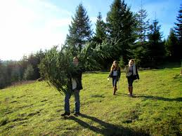 christmas tree farm portland part 48 gorgeous christmas tree