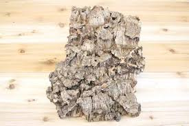 large cork tree bark with 5 air plants 10 inch x 16 inch bark with f