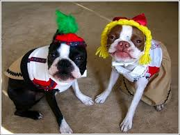 Hansel Gretel Halloween Costume Boston Terrier Halloween Costume Showcase 2006