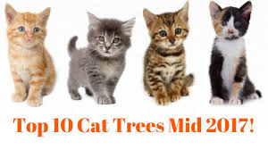top 10 cat trees mid 2017 watch now youtube