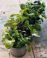 what to grow in your balcony vegetable garden martha stewart