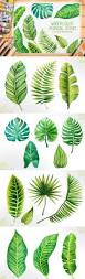 best 25 tropical leaves ideas on pinterest tropical background