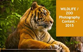 wildlife images Wildlife photography contests for children adults wildtrails jpg