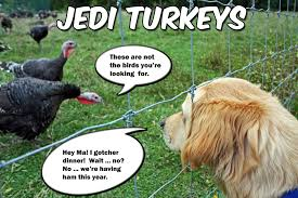 Thanksgiving Turkey Meme - thanksgiving go do be dog
