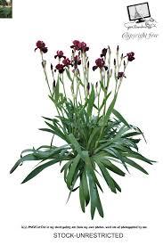 349 best plantas render images on pinterest photoshop plants