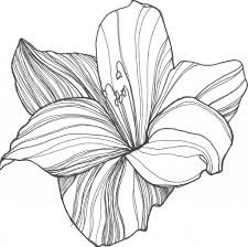a drawing of a flower drawing art gallery