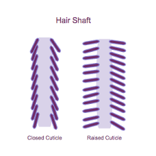 how to take care of the hair cuticle winter hair care for curly hair madison reed