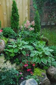 small shade garden astilbes fuchsias hostas creeping jenny