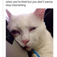 Tired Cat Meme - kitty truck meme google search funny quotes memes that i like