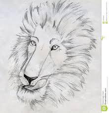 lion sketch stock photo image 29816020