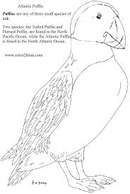 charming beautiful free printable puffins bird coloring books for