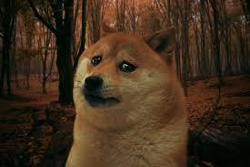 Create A Doge Meme - create meme sad doge sad doge memes old memes pictures