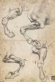 Leonardo Da Vinci Human Anatomy Drawings Leonardo Da Vinci 1452 1519 Teste Di Giovinetta Art U0026 Artists