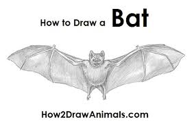 how to draw a bat