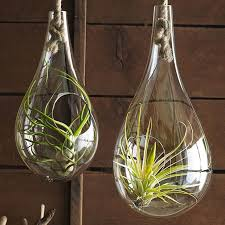 12 stylish terrariums to bring nature inside u2014 eatwell101