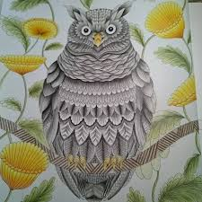 Coloring Ideas Owl Millie Morotta Coloring Book Ideas Owl Coloring Ideas