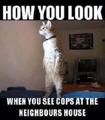 Dirty Meme Jokes - how you look cat meme funny dirty adult jokes memes cartoons