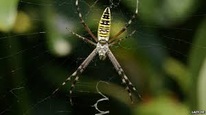 Are Spiders Attracted To Light Bbc Nature Decorative Spider Webs Attract Dinner