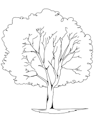White Oak Tree Drawing Oak Trees Colouring Pages Page 2 Within Tree Coloring Pages