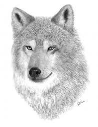 47 best wolf art images on pinterest wolves art art drawings