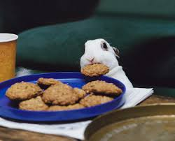 rabbit cookies a rabbit stealing a cookie rebrn