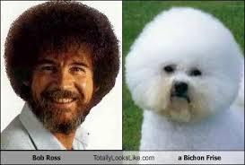 Bob Ross Meme - bob ross totally looks like a bichon frise memebase funny memes