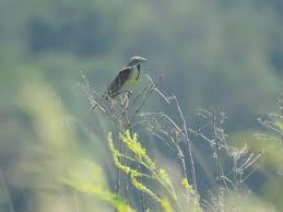 travel to bird travelogue