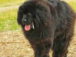 australian shepherd dog names all dog breeds all dog types all dog list names u0026 pictures