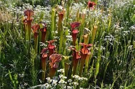 Botanical Garden Design by Garden Design Garden Design With Bog Gardening U Moore Farms