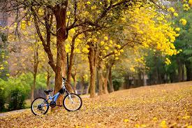 spring flowers yellow trees bike autumn fall mood bokeh wallpaper