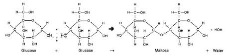 dehydration synthesis and hydrolysis