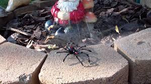 halloween garden gnomes beaded halloween spider attackes garden gnome mp4 youtube