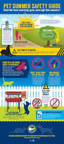 pet summer safety guide the bark