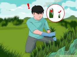 How To Cut Weeds In Backyard 4 Ways To Kill Lake Weeds Wikihow